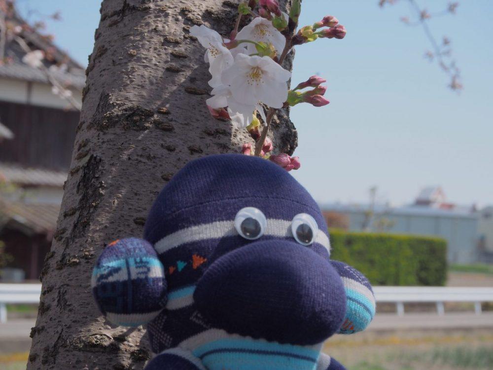 桜の下 大きい写真
